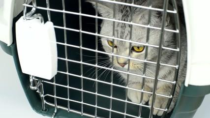 kitten in cage