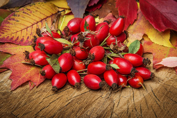 still life with rosehips