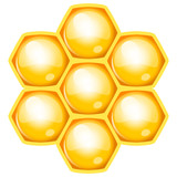 Vector illustration of honeycomb