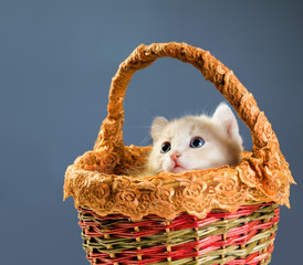 red kittens in basket