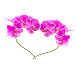 Two beautiful orchid flower repeating the form of the heart.