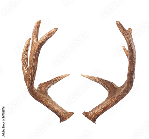 Foto op Aluminium Hert Elk antlers. Isolated on white
