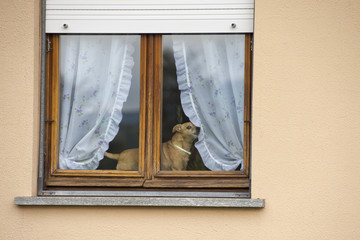 small dog at the window
