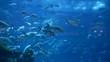 Ray and fishes in the aquarium of Dubai Mall, Dubai, UAE