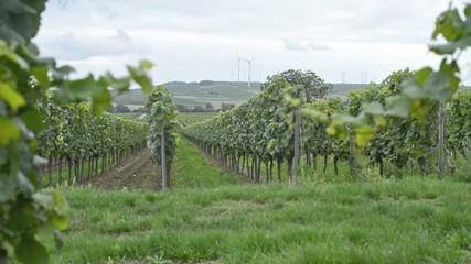 Weinhang in Deutschland