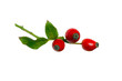 Tree rose-hips berry and leaves
