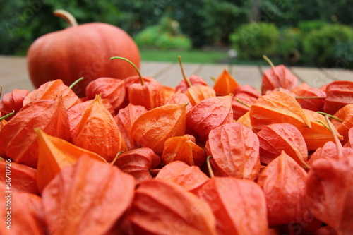 physalis, courge , automne,