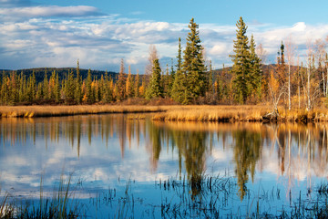 Lake near Fairbanks with dry yellow grass reflecting in water