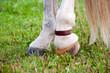Horse copper Pastern strap