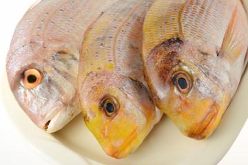 Pesce fresco pescato