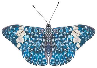 Papillon Craqueur rouge  (Hamadryas amphinome). Face dorsale.