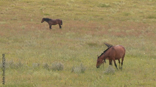 horses and foal in a meadow