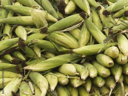 Maiskolben in grünen Blättern auf einem Markt in der Türkei