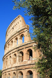 Colosseum and olive tree. Focus is on olive tree