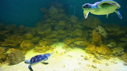 sea turtles and sharks