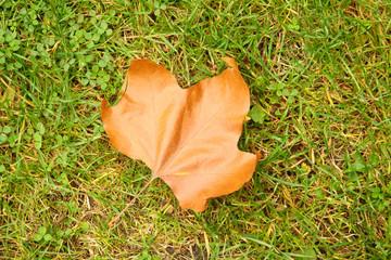 Autumn leaf on ground