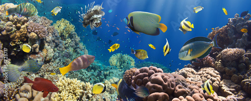 Obraz na Plexi Coral and fish