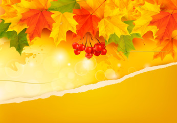 Autumn background with color leaves and rip paper. Vector