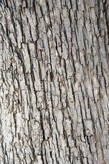 Fir bark texture