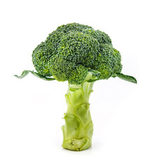 Broccoli stand on white background