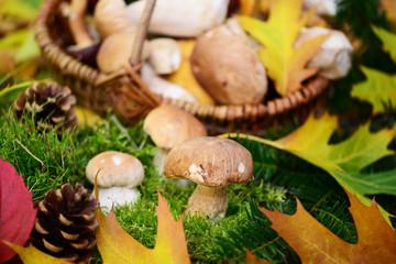 Wald,Pilze