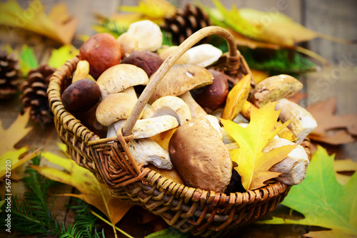 Leinwanddruck Bild Pilze