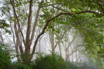 green tree alley in mist