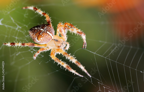 Spider on web
