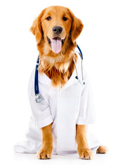 Dog dressed as a Doctor