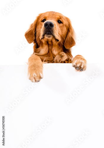 Dog with a banner