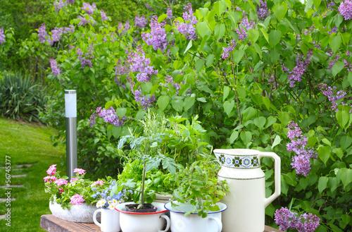 Foto op Canvas Lilac Willkommen am Gartenweg