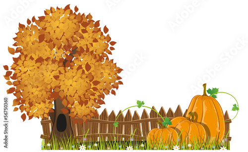 Autumn Tree and pumpkins