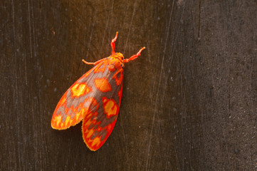 colorful moth on wood background