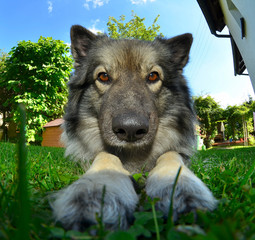 Hund auf Wiese fisheye objektiv