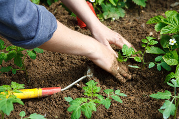 Jardinage eco durable