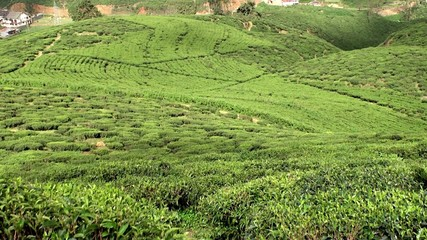 Tea Plantations in the Sri Lankan highlands