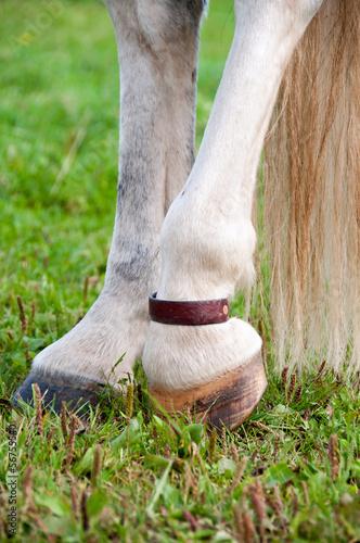 Equine Copper pastern strap