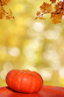 pumpkin und herbstlaub