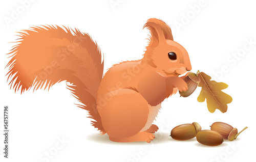 Squirrel with acorns