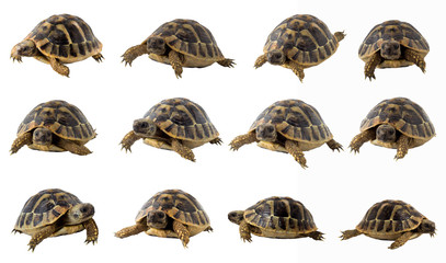 turtle collection
