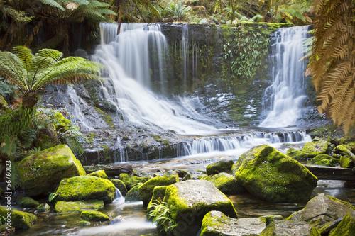 Fototapeten,australien,colourful,wald,grün