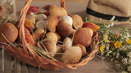 Still life in autumn - HD video clip of edible mushrooms