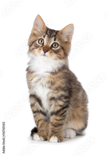 Cute tabby kitten on a white background.