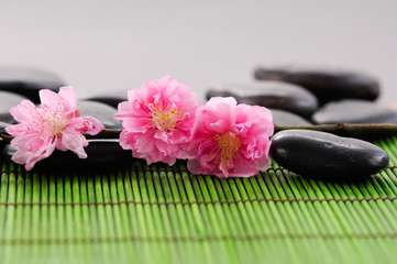 Branch camellia with Stones on green mat