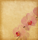 Old worn paper with  orchid