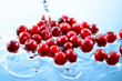 Cranberry. Heap of berries in water