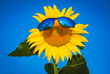 yellow sunflowers in sun glasses on a blue sky