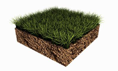 piece of grass