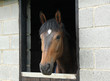 A Lovely Horse Looking out of a Stable Door.