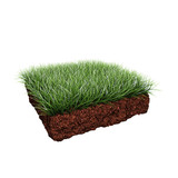 piece of grass